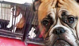 Maltrato animal: vecina del Rímac graba a perros enjaulados
