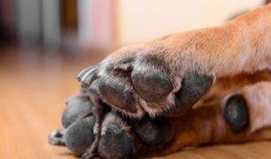 EE.UU: reportan el primer caso de coronavirus en un perro