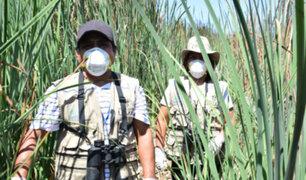 Pantanos de Villa: conoce a los héroes que protegen la vida silvestre en plena cuarentena
