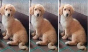 Callao: perro fue reportado como perdido en pleno estado de emergencia