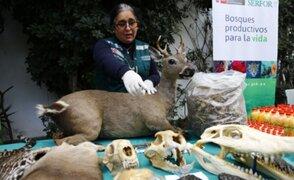 Día de la Tierra: Defensoría pide frenar consumo y tráfico ilegal de animales silvestres