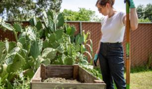 Jardinería se convierte en nuevo pasatiempo en todo el mundo en tiempos de pandemia