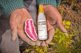 Empresa de vodka peruano elaborará alcohol antiséptico de papas para campesinos