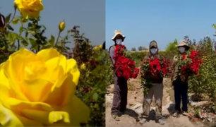 Pandemia del COVID-19 también deja pérdidas económicas en floricultores