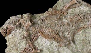 Descubren el esqueleto entero de un mamífero de hace más de 66 millones de años