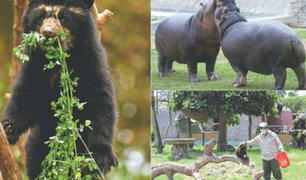 Parque de las Leyendas realiza campaña para salvar a los animales del recinto