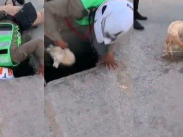 Lambayeque: Policía salva a perrito que se ahogaba en canal de regadío