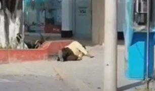 Tumbes: vigilante se desvanece durante su jornada laboral