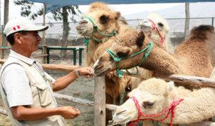 Zoológico de Huachipa inicia preventa de entradas para alimentar a animales