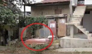 [VIDEO] Tumbes: abandonan ataúd con cadáver en puerta de casa