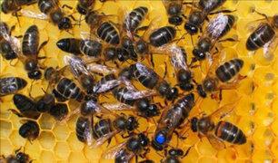 UE reducirá uso de pesticidas para proteger a las abejas y la biodiversidad