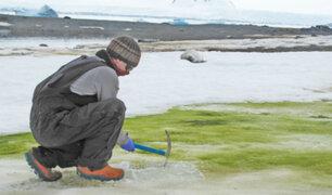 Cambio climático convierte la superficie de la Antártida verde
