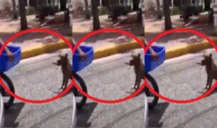 República Dominicana: chofer interceptó a motociclista que arrastraba a perro por la calle