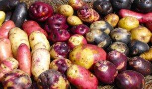 Día Nacional de la Papa: conoce cómo este alimento peruano refuerza tus defensas