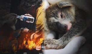 Nace primer koala tras incendios que golpearon a Australia