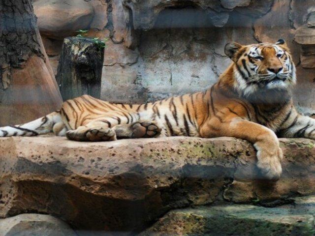 Indonesia: animales de zoológicos podrían morir de hambre a causa del crisis por pandemia