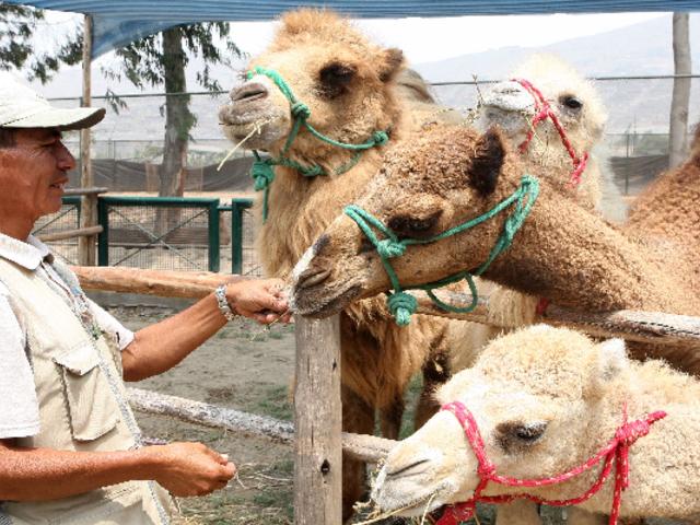 Zoológico  de Huachipa lanza campaña para asegurar alimentos de animales