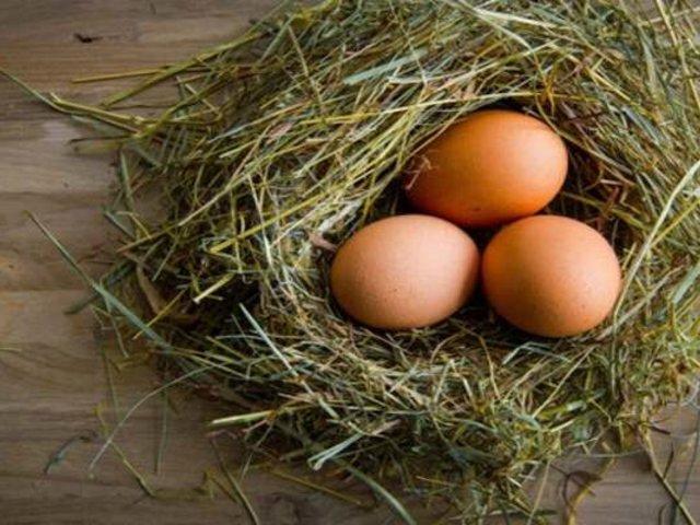 Huevos de gallina podrían frenar avance del COVID-19