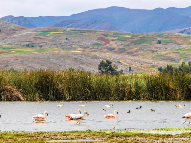Junín: laguna de Chocón renace en medio de emergencia por coronavirus