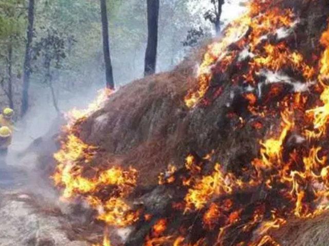 Guatemala: incendios arrasan miles de hectáreas de bosques