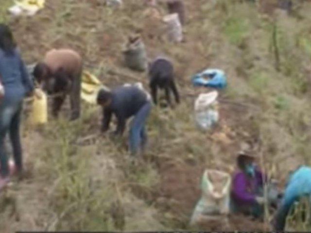 Áncash: agricultores temen perder sus cosechas por la pandemia del COVID-19