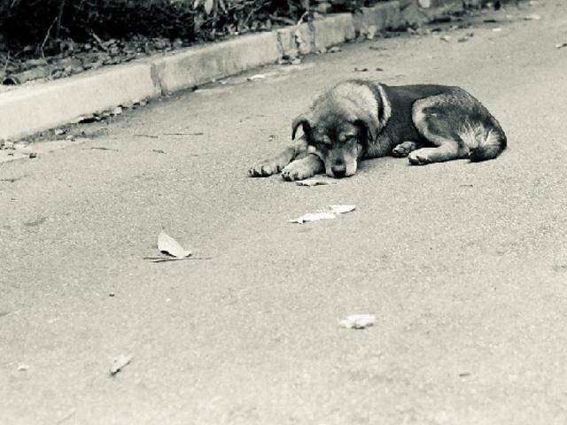 Surco: multarán con S./ 4.300 a quienes abandonen a sus mascotas en la vía pública