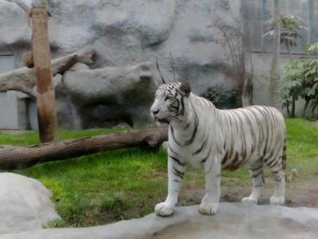 Gobierno destinó S/ 4 millones para el cuidado de los animales en los zoológicos