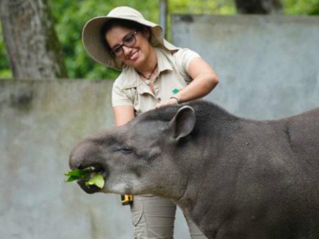 Estado de emergencia: destinan S/ 3.9 millones a centros de cría de animales silvestres