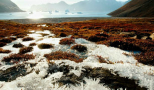 Derretimiento de glaciares despierta bacterias y virus congelados durante cientos de años