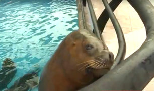 Parque de las leyendas: lanzan campaña 'Súmate' para mantener cuidado de los animales