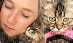 """Bélgica: gato cusqueño """"Lee"""" no será sometido a la eutanasia por haber ingresado sin control sanitario"""