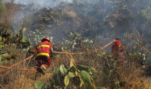 Incendio forestal destruyó plantaciones de eucalipto en Andahuaylas