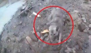 Noruega: rescatan a perro de deslizamiento de tierra