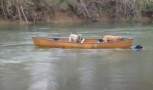 Perrito salvó a sus compañeros que iban a ser arrastrados por río