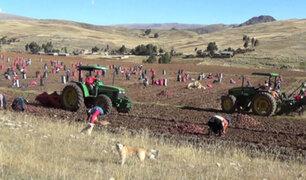 Senamhi: bajas temperaturas nocturnas podrían afectar cultivos