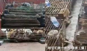 China: rescatan 700 gatos que iban a ser servidos como comida