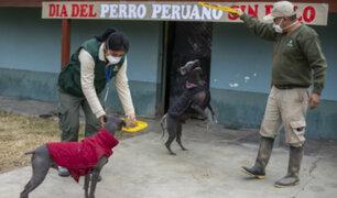 Día del Perro Peruano: Lucas y Ludovico celebran esta fecha en el Parque de Las Leyendas