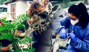Este es el duro trabajo de los cuidadores de un zoológico