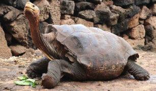 Tortuga de Galápagos que evitó desaparición de su especie regresa a su hábitat tras más de 80 años