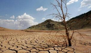 Día Mundial contra la Desertificación: en 5 años se perdieron 3,3 millones de hectáreas forestales, según ONU