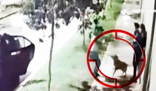 Surco: perro se enfrenta a delincuentes armados para evitar robo