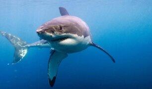 Estados Unidos: joven es atacado por tiburón y salva de morir tras ser rescatado por su padre