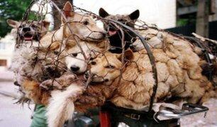 China: abrió sus puertas feria de carne perro en plena crisis sanitaria por la COVID-19
