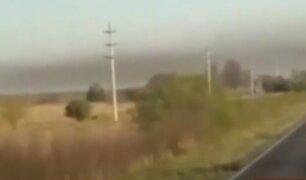 Argentina: nube de langostas desata alarma en Corrientes