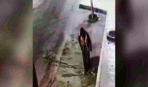 Bellavista: delincuentes se roban hasta árboles en plena calle