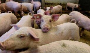 G4: alertan en China de nuevo virus respiratorio con potencial pandémico