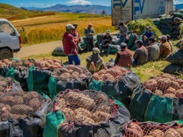 Agricultores de Apurímac envían más de 200 toneladas de papa a los mercados de la capital