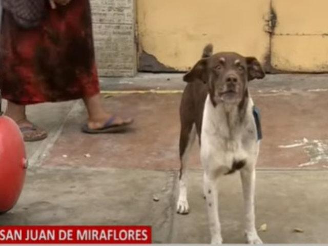 SJM: Vecinos temen que atenten contra perro que salvó a un joven de ser asaltado