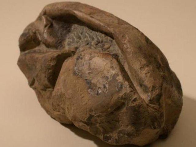 Logran identificar a qué especie pertenece el huevo más grande de la era de los dinosaurios