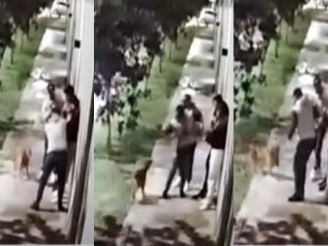 Surco: Perro se enfrenta a delincuentes armados para defender a sus dueños